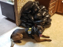 Mohave County Sheriff's Office (MCSO) K-9 next to historic meth seizure